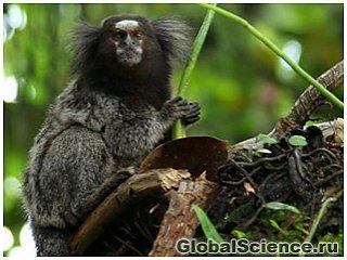 Более 150-ти видов животных и растений обнаружено в джунглях Амазонки