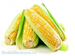 Биотопливо из кукурузы опасней для экологии, чем бензин