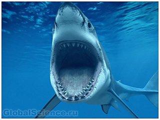 Новую полярную акулу обнаружили в водах близ земли Франца-Иосифа