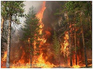 Регионы России охвачены пожарами. Как это  влияет на каждого россиянина?