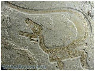 В районе Аргентины найдены останки исполинского динозавра