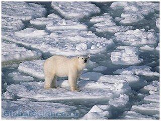 Каждый год в Антарктиде тает 159 миллиардов тонн льда