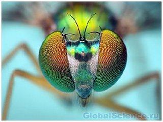 У насекомых есть интеллект
