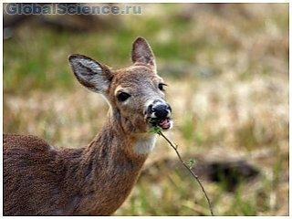 В Омске наладили охрану животного мира