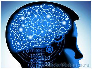 Ученые нашли ген, который отвечает за двигательный центр мозга