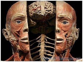 Когнитивная терапия – это эффективный метод лечения шизофрении