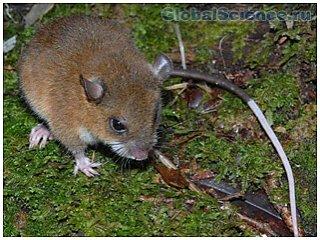 Ученые обнаружили новые виды млекопитающих в Папуа Новой Гвинее