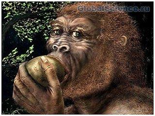 Ученые определили рацион древнего человека