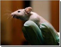 Разработано экспериментальное лекарство, блокирующее развитие рака простаты
