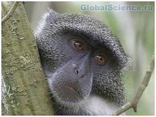 В Крыму обезьяна, убившая ребенка, подалась в бега
