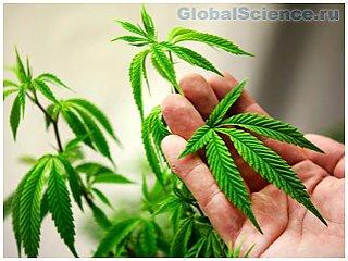 По мнению ученых, марихуана вызывает паранойю