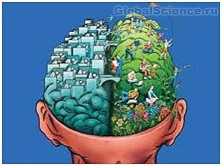 Ученые опровергли еще одну теорию о головном мозге