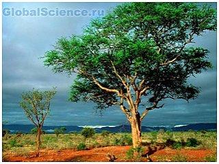 Дерево - спасательный круг человека