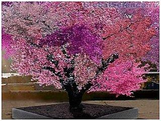 40 видов плодов на одном дереве