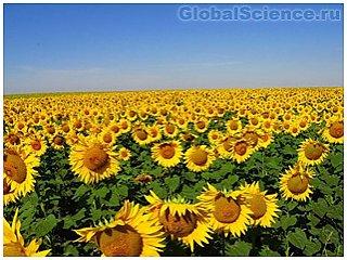Через тридцать пять лет урожай на земле достигнет критической отметки