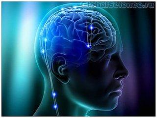 Ученые нейрофизиологи обнаружили не стареющую часть мозга