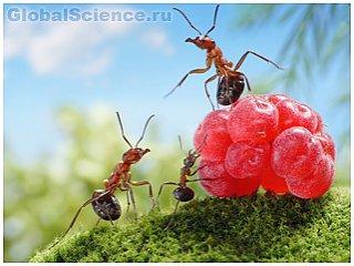Развитие личностных качеств у муравьёв формирует среду обитания