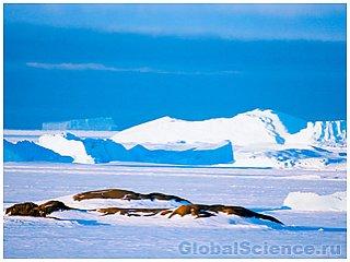 В Антарктиде зарегистрированы новые признаки жизни