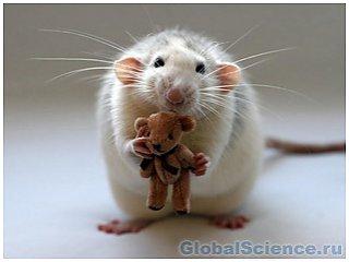 Крысы готовятся к полету на Марс