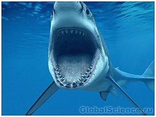 Акулам больше нравятся мужчины