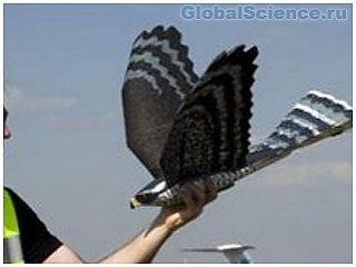 Голландские ученые изобрели роботов-птиц для защиты полей и аэродромов