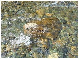 Уральскими туристами была найдена голова динозавра