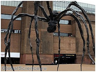 Британцев ожидает нашествие гигантских пауков