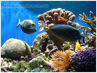 Доказана теория предрасположенности рыб к играм