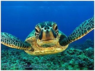 Впервые создана биофизическая модель плавающей черепахи