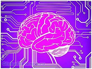 Сколько ядер в процессоре человеческого мозга?