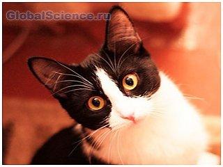 Ветеринары задумались о моральной стороне стерилизации кошек