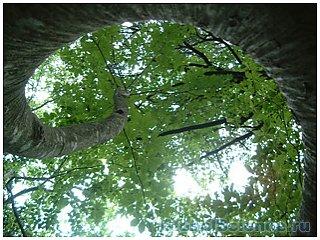 Идеальное место для самоубийства – лес Аокигахара