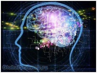 Кора головного мозга обладает способностью к восстановлению