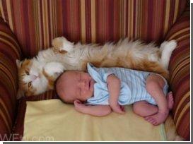 Экзему у младенцев могут вызывать кошки и определенная генная мутация