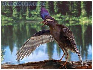 Первые летающие птицы появились более 130 млн лет назад