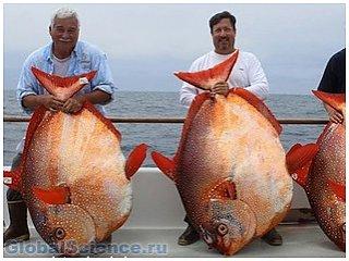 Ученые нашли первую в мире теплокровную рыбу