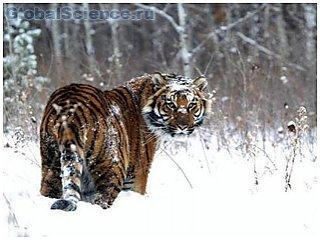Природа не щадит животных, засыпая их снегом