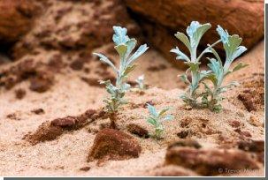 И на Марсе зацветут сады! Марсианская почва пригодна для жизни растений