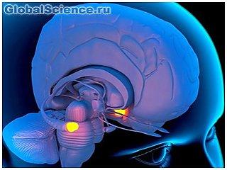 Во время исследования мозга человека ученые нашли черный ход