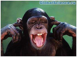 У шимпанзе есть свои моральные принципы