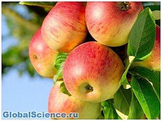 Ученые диетологи доказали пользу яблок