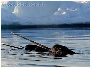Российские полярники нашли китов в Арктике