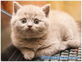 В Японии разработали защиту клавиатуры от кошек