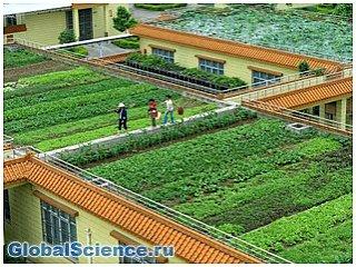 В Китае посадили рисовые поля на крыше пивоварни