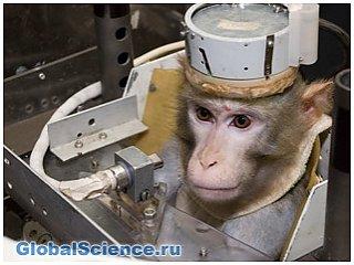 """""""Роскосмос"""" запустит обезьян на марс"""