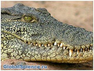 Ученые из Австралии выяснили, почему крокодилы спят с одним открытым глазом