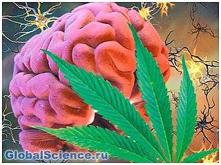 Ученые установили причины привыкания человека к марихуане