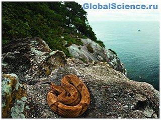 Показан самый опасный в мире остров, на который невозможно попасть