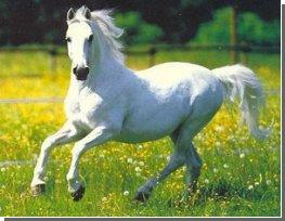 Білий кінь розкрила свої генетичні секрети