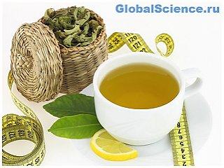 Ученые: Зеленый чай ускоряет метаболизм и помогает похудеть
